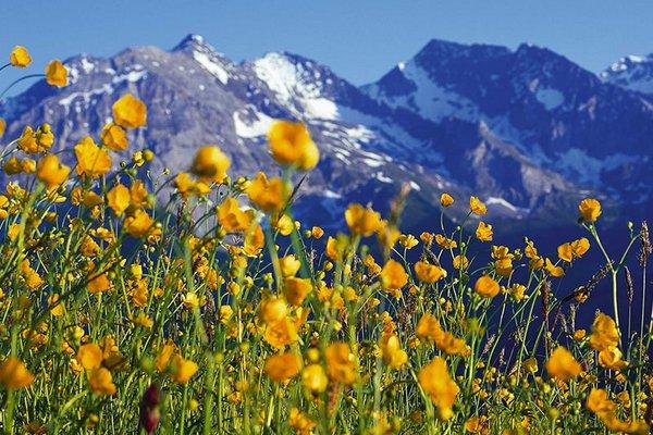 naturpark_zillertal_blumen.jpg